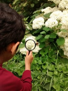 magnifying butterfly